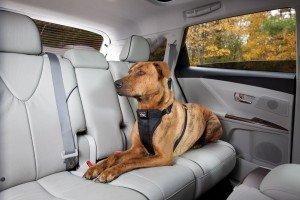 Kurgo Tru-Fit Smart Dog Harness, Large, Black