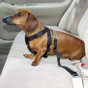 Leegoal Car Vehicle Auto Seat Safety Belt Seatbelt for Dog Pet