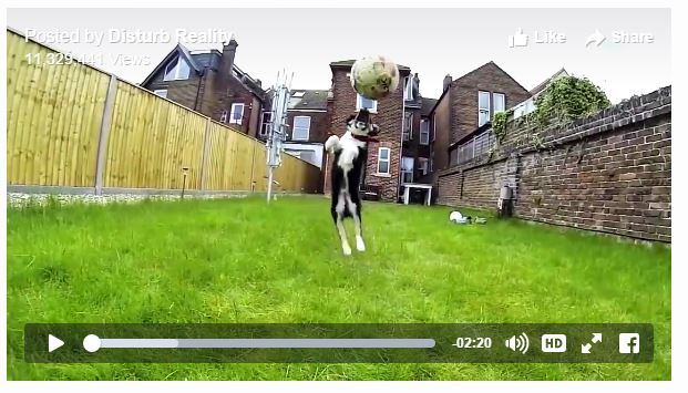 Dogs fail to be dogs funny video