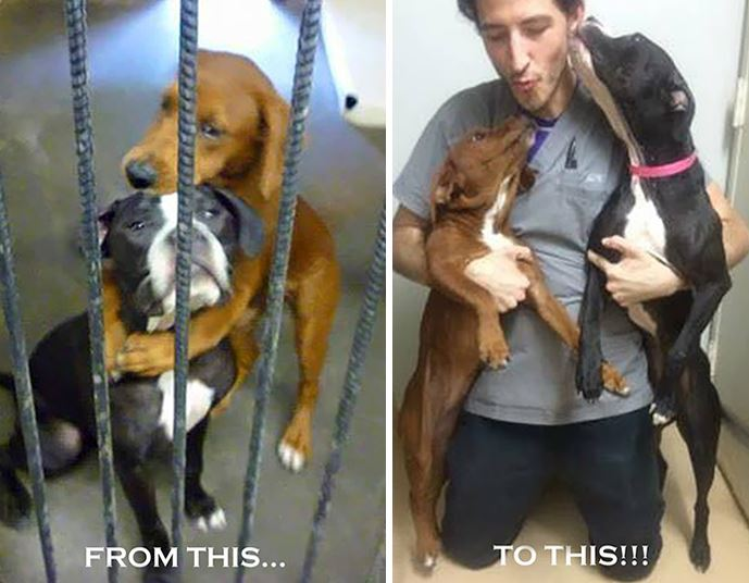 Viral photo of dogs hugging  before euthanasia found them foster home