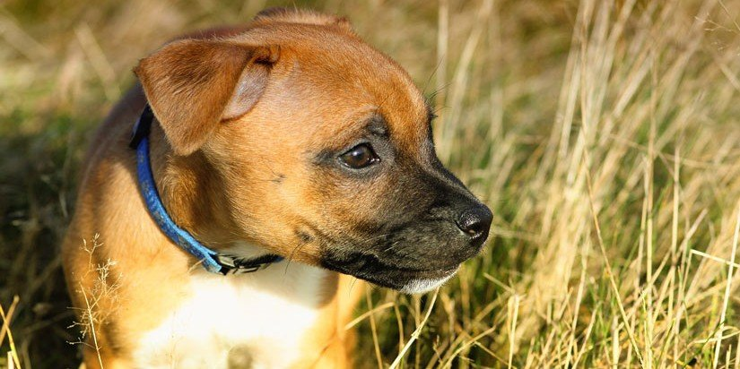 Simple dog care tips to keep your puppy healthy