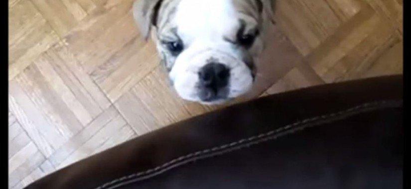 Top 10 funniest dog videos