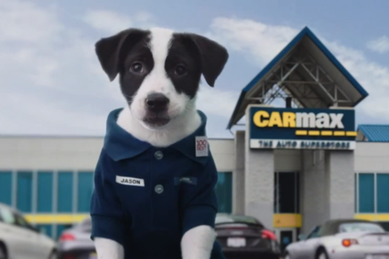 CarMax puppy commercial
