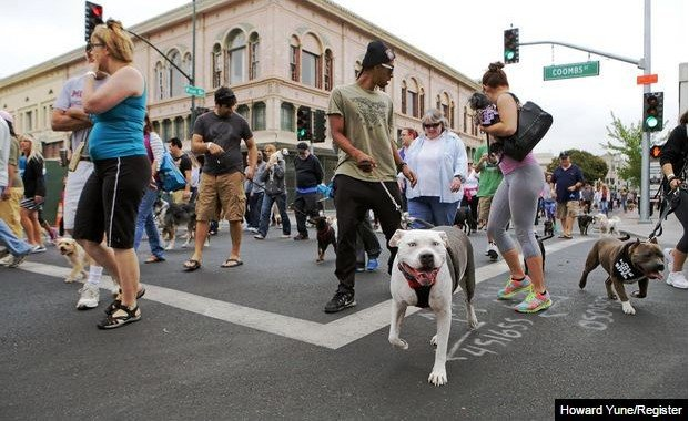 Napa dog walk day