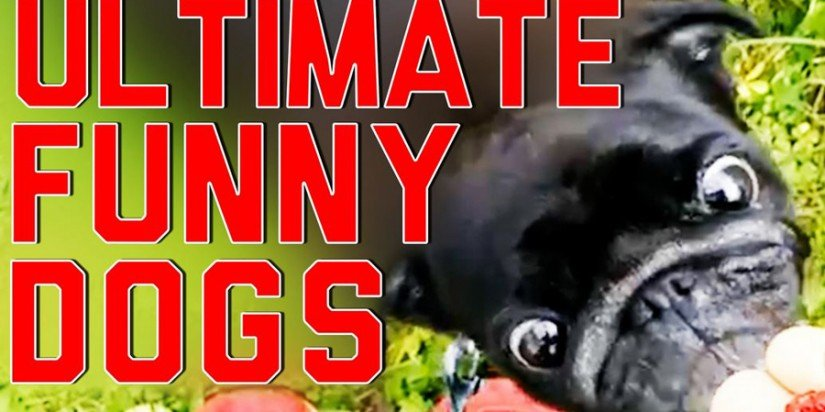 Funnies dogs video compilation