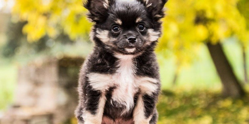 Dog care tips caring for dogs