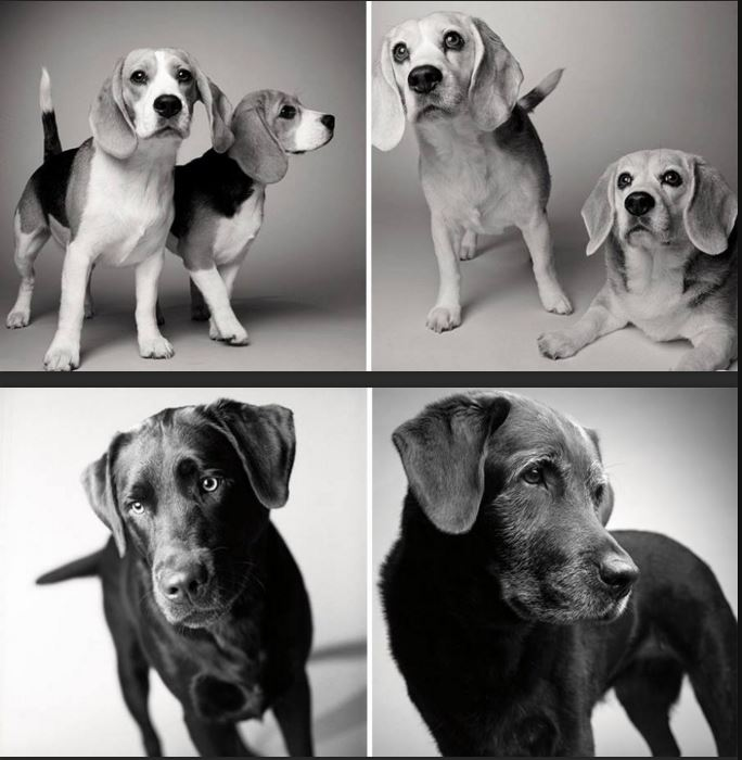 dogs-age